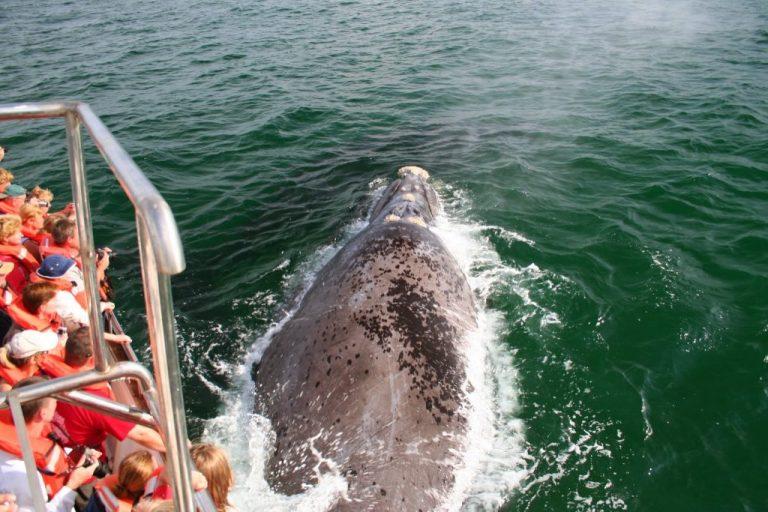 Whales-Ocean-Safaris-Plettenberg-200-1-1024x683