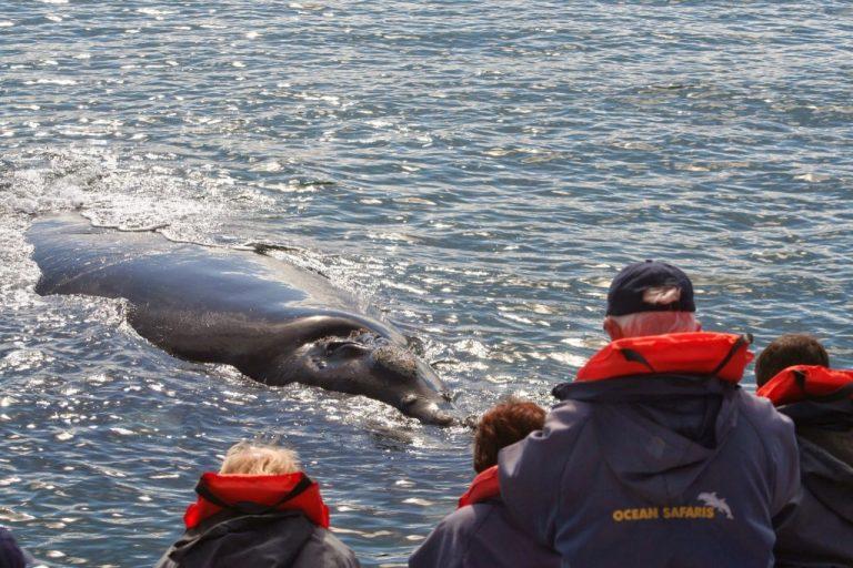 Whales-Ocean-Safaris-Plettenberg-192-1024x683